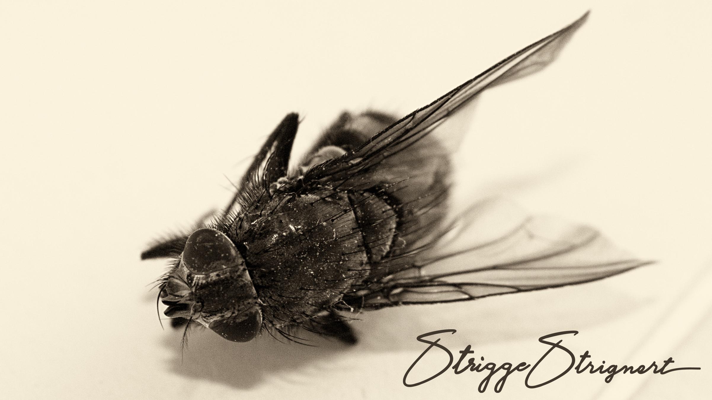 Dead-fly